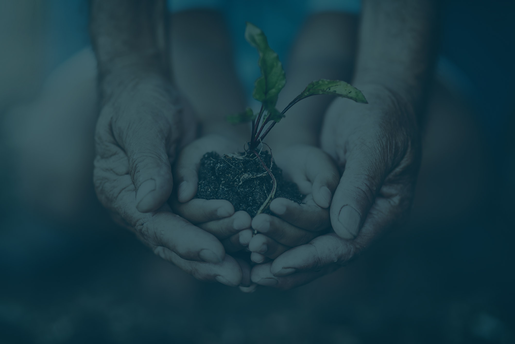 Image of a child's hand holding a seedling